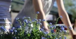 Wie Gartenarbeit bei Liebeskummer hilft